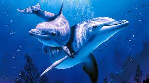 the best relax music and dolphins aquarium sleep relaxing music