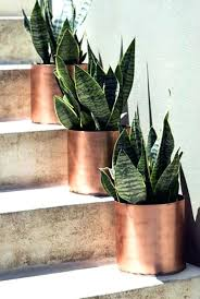 best indoor house plants house plants for sale near me inspirational best indoor house plants