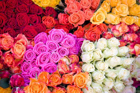wholesale roses wholesale flowers in visalia ca