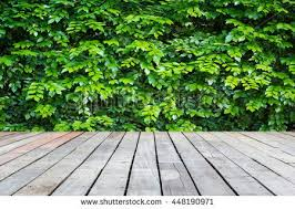 wooden leaves wall wooden plank green leaves wall background stock photo 447176788