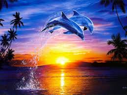 Dolphin Home Decor Dolphin Sunset Wallpaper And Background 1680x1260 Id 679673