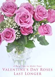 s day roses tips to make your s day roses last longer hometalk