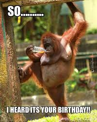 Sexy Beast Meme - happy birthday you sexy beast card meme images happy bday