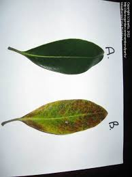 Garden Pests Identification - garden pests and diseases identify problem with little gem