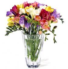 cut flowers freesia