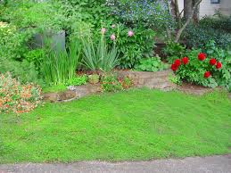 how to choose groundcovers and plants to use as lawn alternatives