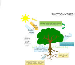 Photosynthesis Concept Map Photosynthesis Flowchart Creately