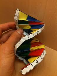 Dna Model Origami - origami dna richer ramblings