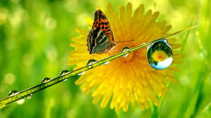 your resolution and download butterfly flower waterdrop wallpaper