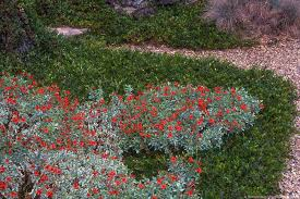california native plant gardens california native summer dry celebrate plants in summer dry