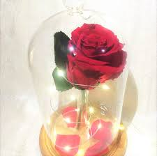 beauty and the beast enchanted red rose u2013 stellar bloom