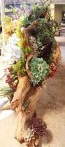 66 best succulent arrangement images on pinterest succulent