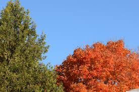 free images tree nature forest branch sky leaf foliage