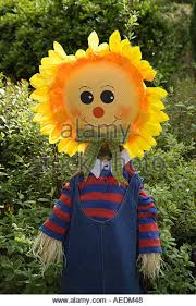 sunflower scarecrow garden ornament stock photos sunflower