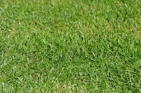All Star Landscaping by Allstar Landscaping Landscape Management Surrey White Rock
