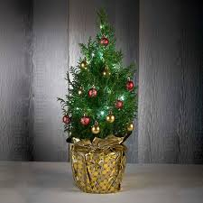 live tabletop tree out of stock figi s