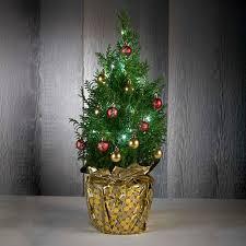 tabletop christmas tree live tabletop christmas tree color out of stock figi s