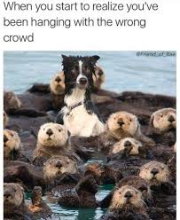 Memes Funny Animals - 45 funny animal memes that ll make you laugh till you cry