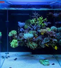 Reef Aquascape Designs 287 Best Nano Reef Inspiration Images On Pinterest Reef