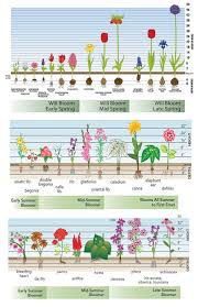 Flower Bed Plan - best 25 fall flower gardens ideas on pinterest bulb flowers