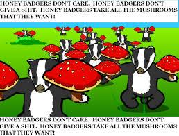 Badger Memes - image 140933 honey badger know your meme