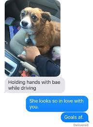 Dog Driving Meme - holding hands with bae while driving