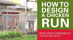 backyard chickens how to design your chicken run youtube