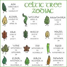 the celtic tree zodiac brilliant celtic tree