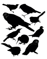 native new zealand plants list new zealand bird silhouettes birds pinterest bird silhouette