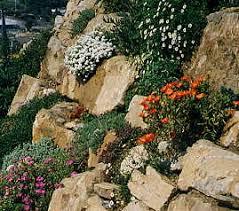 giardini rocciosi in ombra costruire un giardino roccioso compagnia giardinaggio