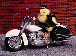 Funny Motorcycle Meme - nice 30 funny motorcycle memes wallpaper site wallpaper site