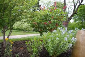 why plant native plants native roots