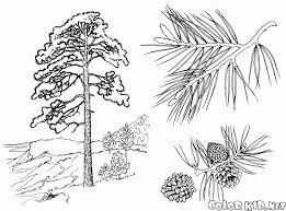 coloring page rowan tree