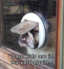 Funny Animals Meme - 31 most funny animals memes quoteshumor com