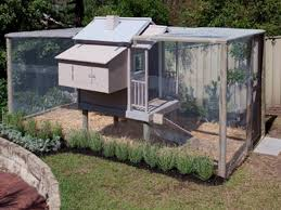 chicken coops you will go totally clucky over the whoot