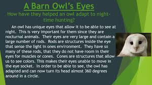 Lab Activity The Food Web Of A Barn Owl Lab Activity Discover What