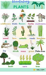 plants and trees vocabulary plant names in 7 e s l