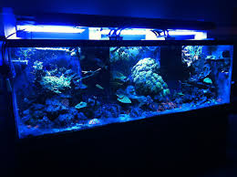 t5 lighting fixtures for aquariums saltwater tank lights best lighting 2018