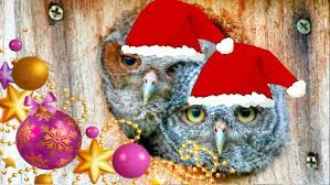 we wish you a merry christmas baby owls youtube