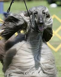 afghan hound judith light 15 best broad city images on pinterest broad city comedy