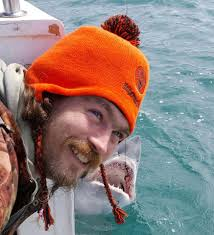 which sharks are in british waters how rare are shark attacks and