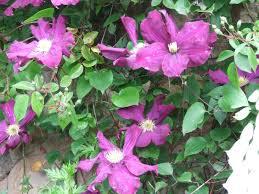 mereliz cottage garden or a garden fit for a cottage chapter 5