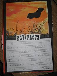 54 best bats activities for first second and third grade images