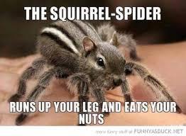 Spider Meme - spider meme city