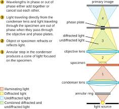 Delaware how far does light travel in one second images Instruments of microscopy microbiology jpg