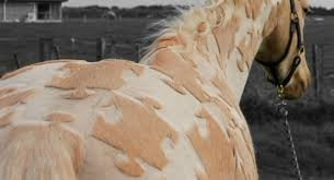 hairstyles for horses horses with crazy hairstyles