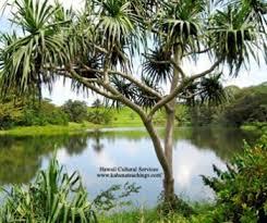 kahu wendell silva hawaiian cultural lessons