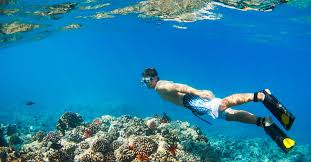 Wyoming Snorkeling images 10 best snorkeling spots on maui exotic estates jpg