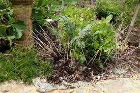 Rabbit Repellent For Gardens by How To Stop Rabbits From Eating Your Plants Plants Gardens And
