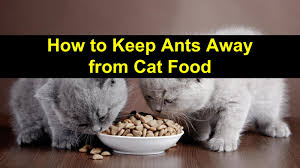 how to keep ants away from cat food titlimg 1 jpg